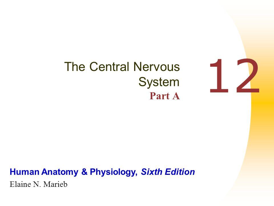 Human Anatomy & Physiology, Sixth Edition Elaine N. Marieb 12 The ...