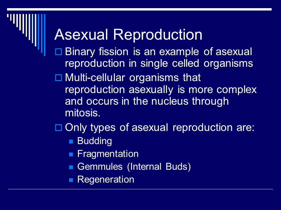 Advantages of fragmentation in asexual reproduction of the genetic information
