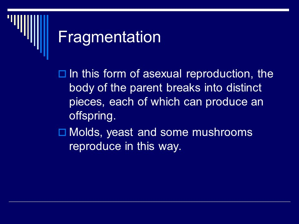 Time aligned parallel fragmentation asexual reproduction