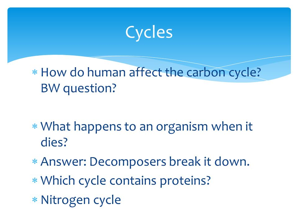 chapter 18 ecology study guide and notes producers and examples rh slideplayer com Ecology Study Games Ecology Study Games