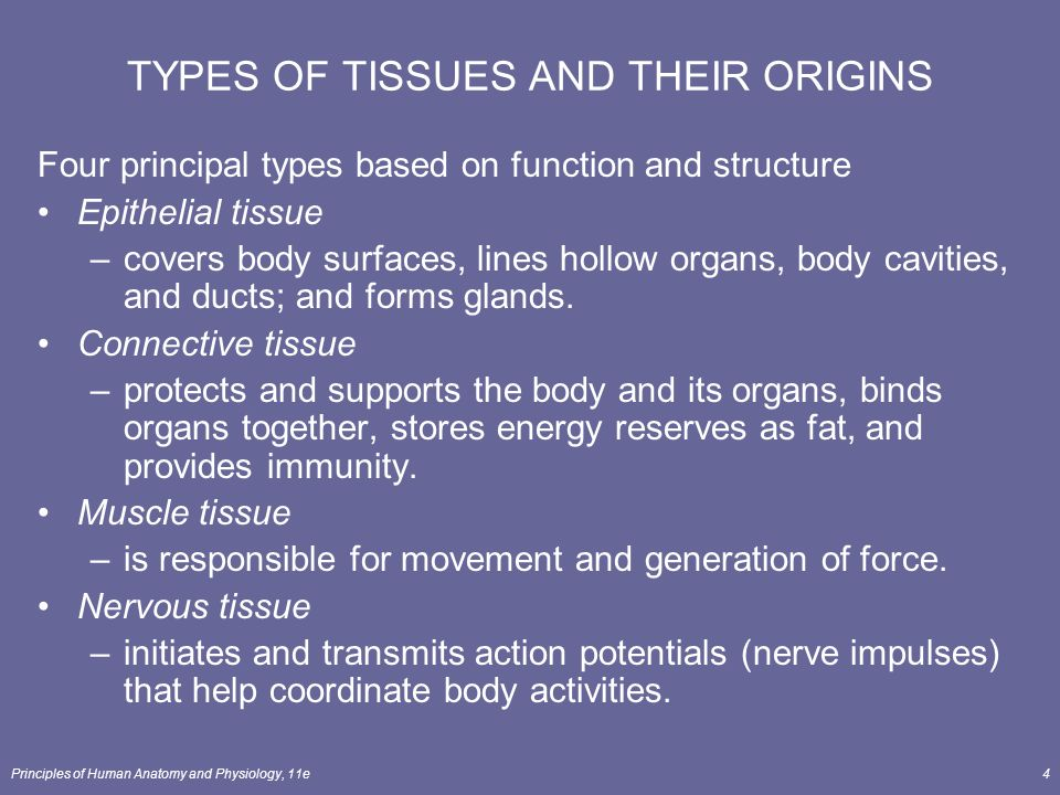 Principles Of Human Anatomy And Physiology 11e1 Chapter 4 The