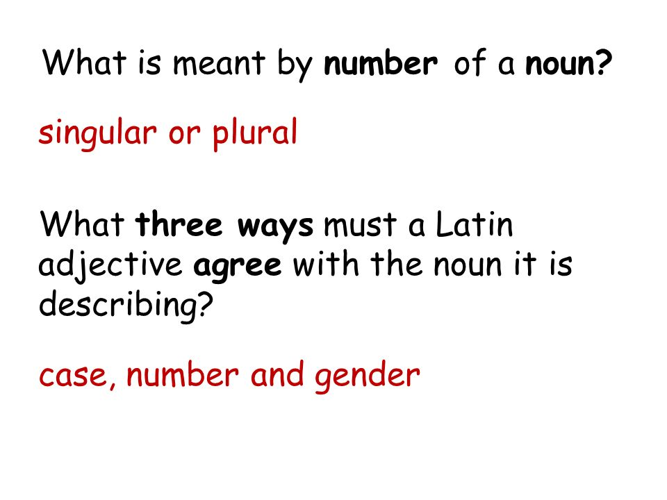 Latin Noun Adjective Agreement Gallery Agreement Letter Format