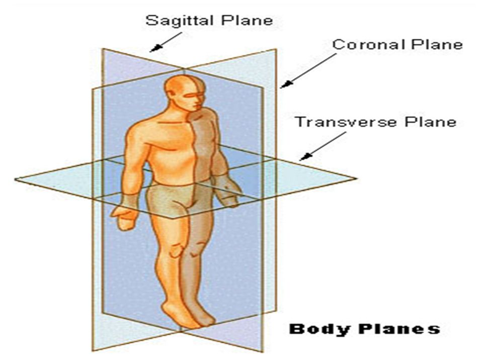 INTRODUCTION TO ANATOMY – ANATOMICAL TERMS / PLANES / & MOVEMENTS ...
