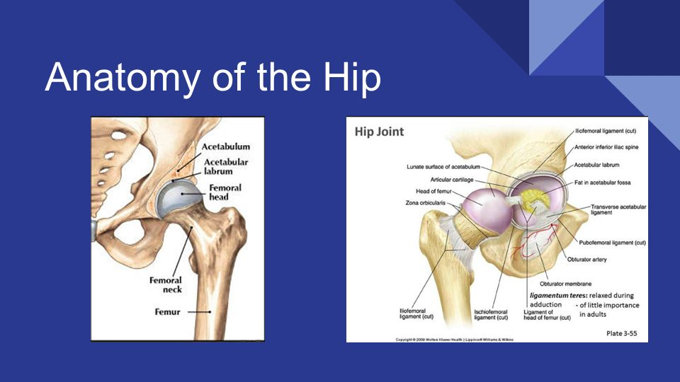 Disease and Injury of the Hip By Ly Nguyen & Hayley Lough. - ppt ...