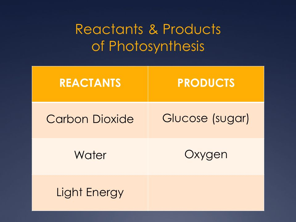 products of chemosynthesis