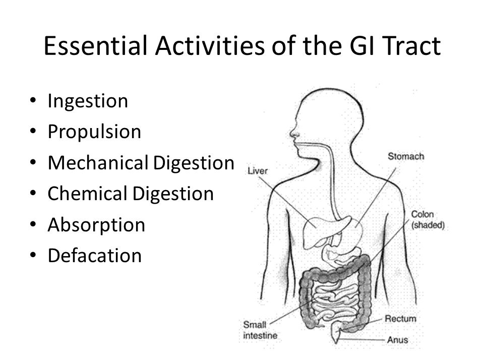 Chapter 14 Functions Of The Digestive System What Activities Occur Within The Gi Tract Ppt Download