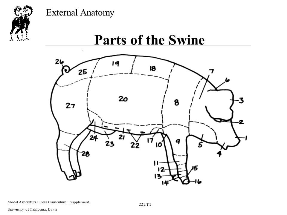 External Anatomy Model Agricultural Core Curriculum: Supplement ...