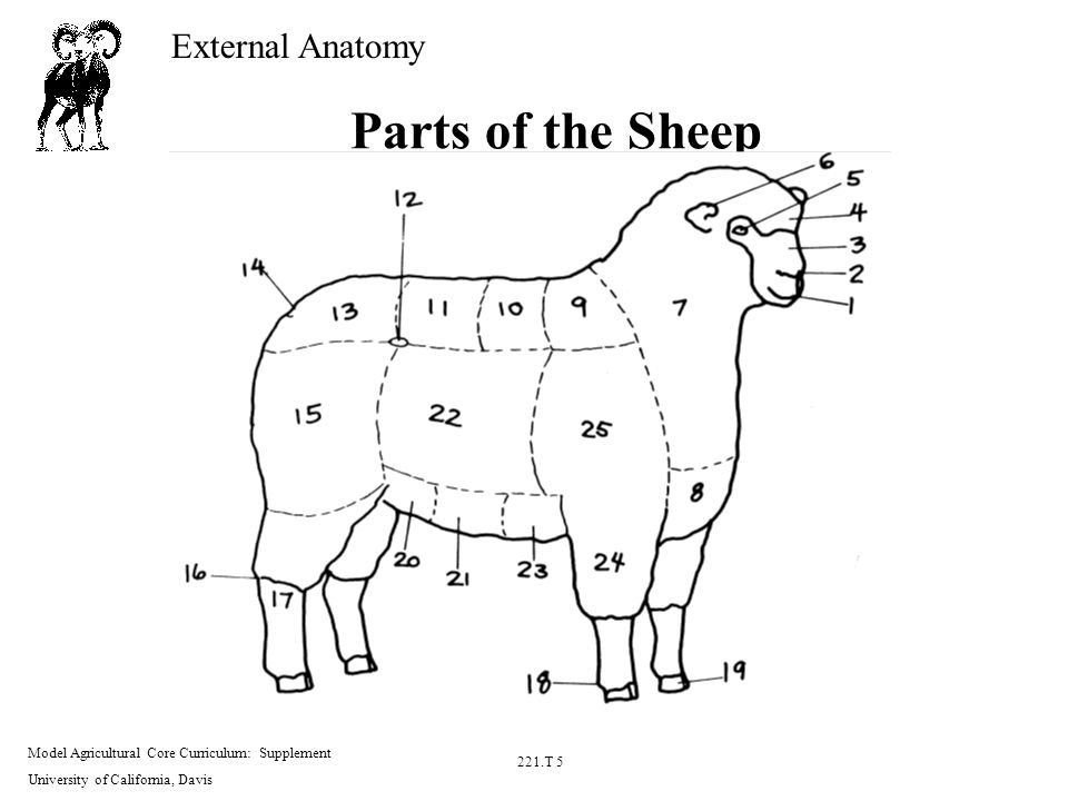 Sheep External Diagram - House Wiring Diagram Symbols •