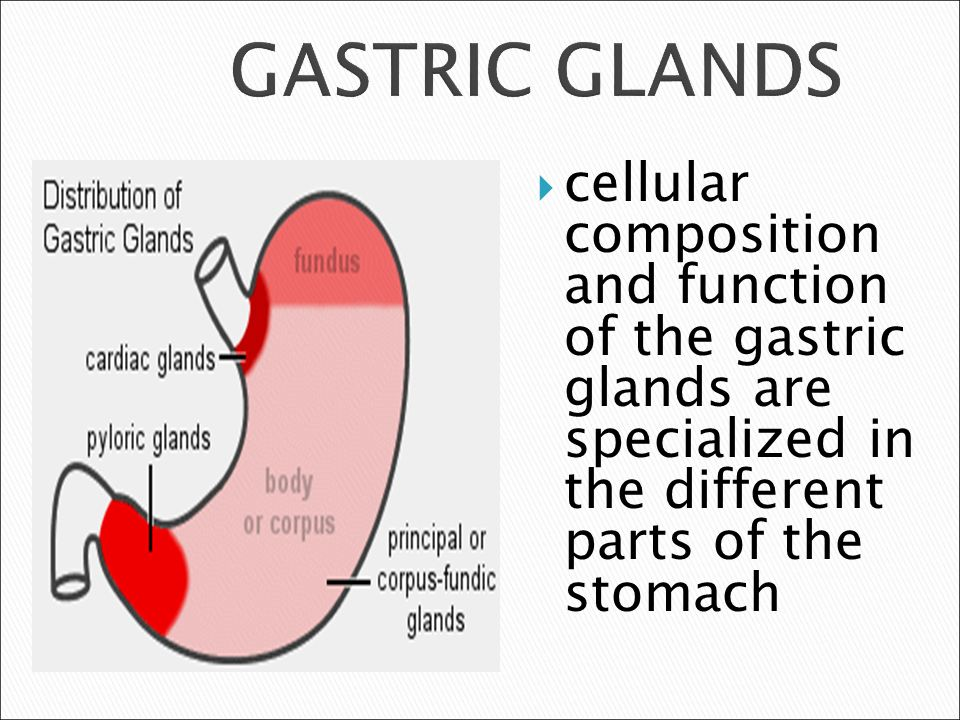 what are gastric glands