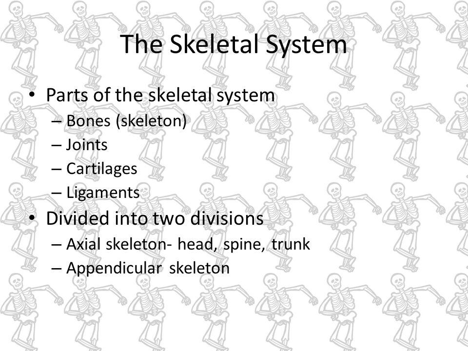 Ch 7 Skeletal system The Skeletal System Parts of the skeletal ...