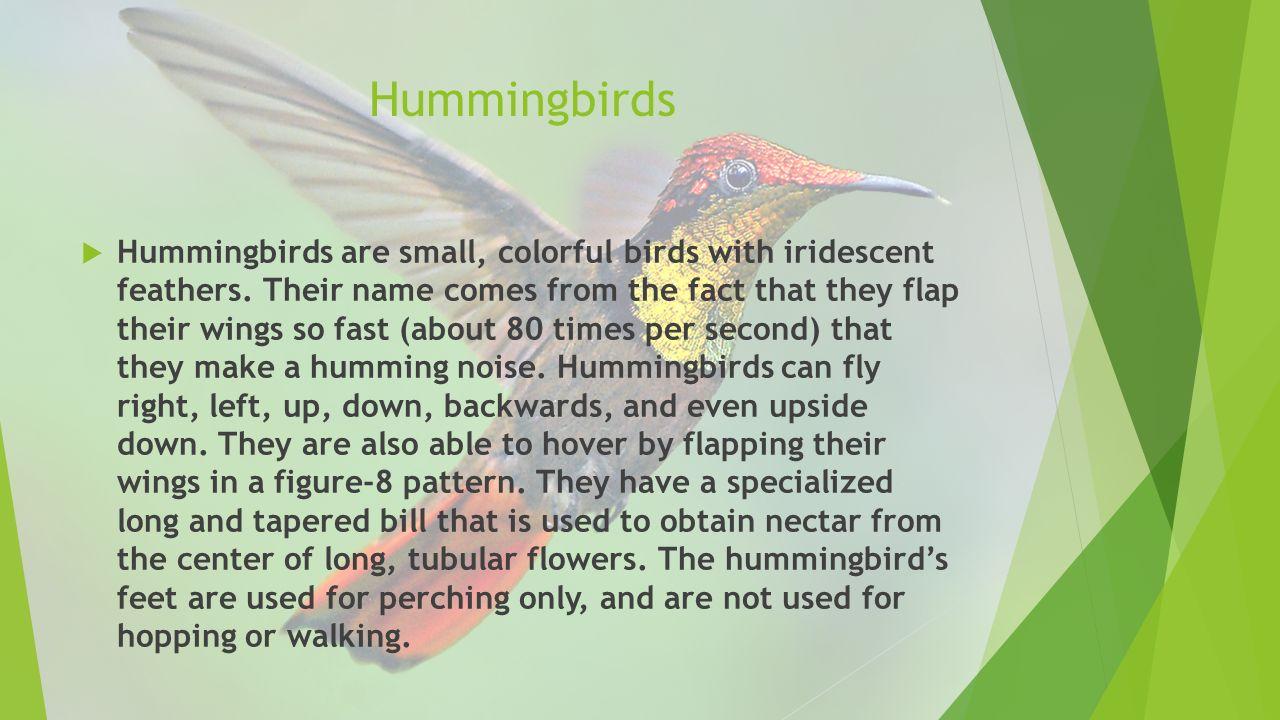 2 Hummingbirds  Hummingbirds are ...