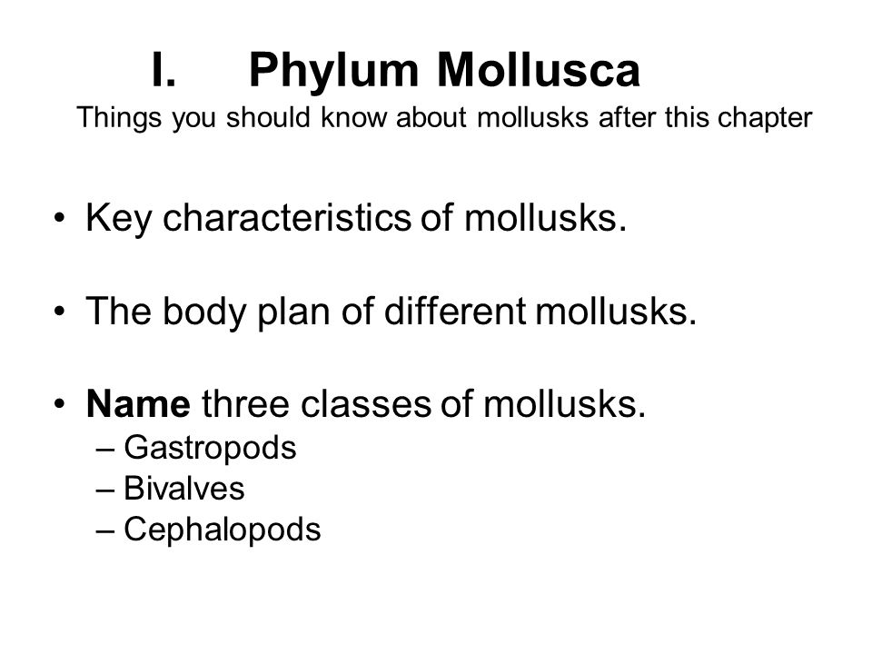 Chapter 35 Mollusks And Annelids Staticblogr Ppt Download. Iphylum Mollusca Things You Should Know About Mollusks After This Chapter Key Characteristics Of. Worksheet. Mollusks Worksheet Answer Key At Mspartners.co