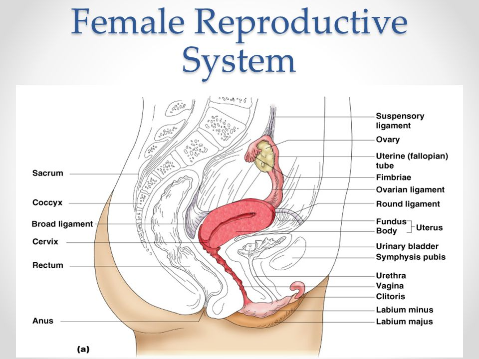 Reproductive System PTA 120-Pathology Week 10. Objectives Describe ...