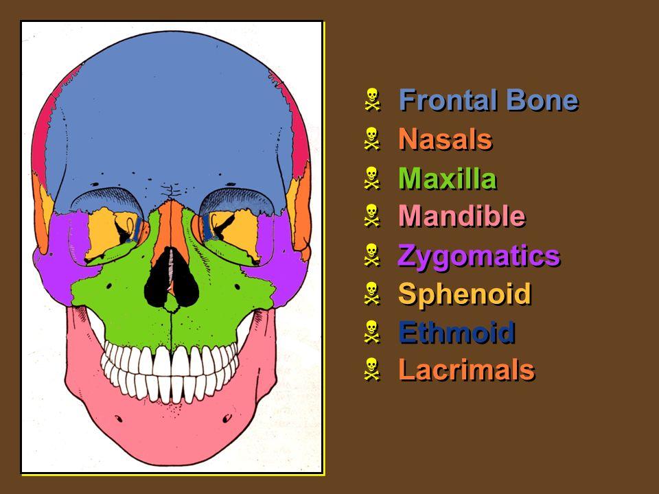 Slide 1 Skull Mandible Sutures Bones Of The Cranium Major
