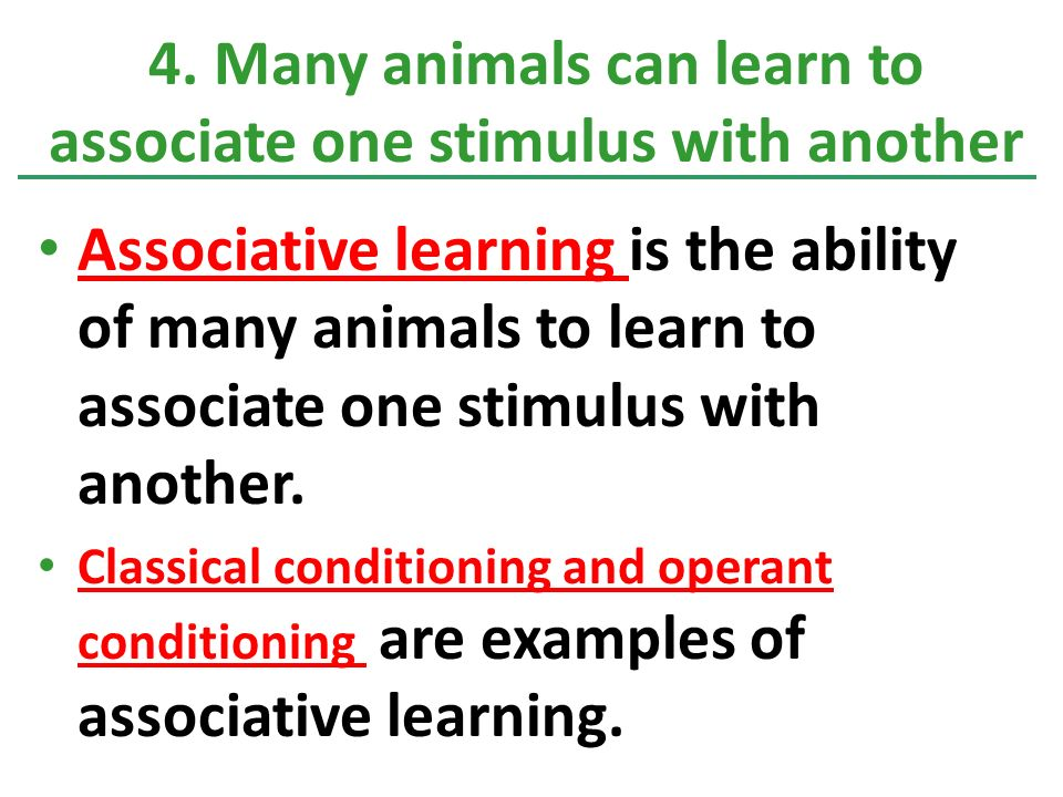 Associative learning is the ability of many animals to learn to associate one stimulus with another.
