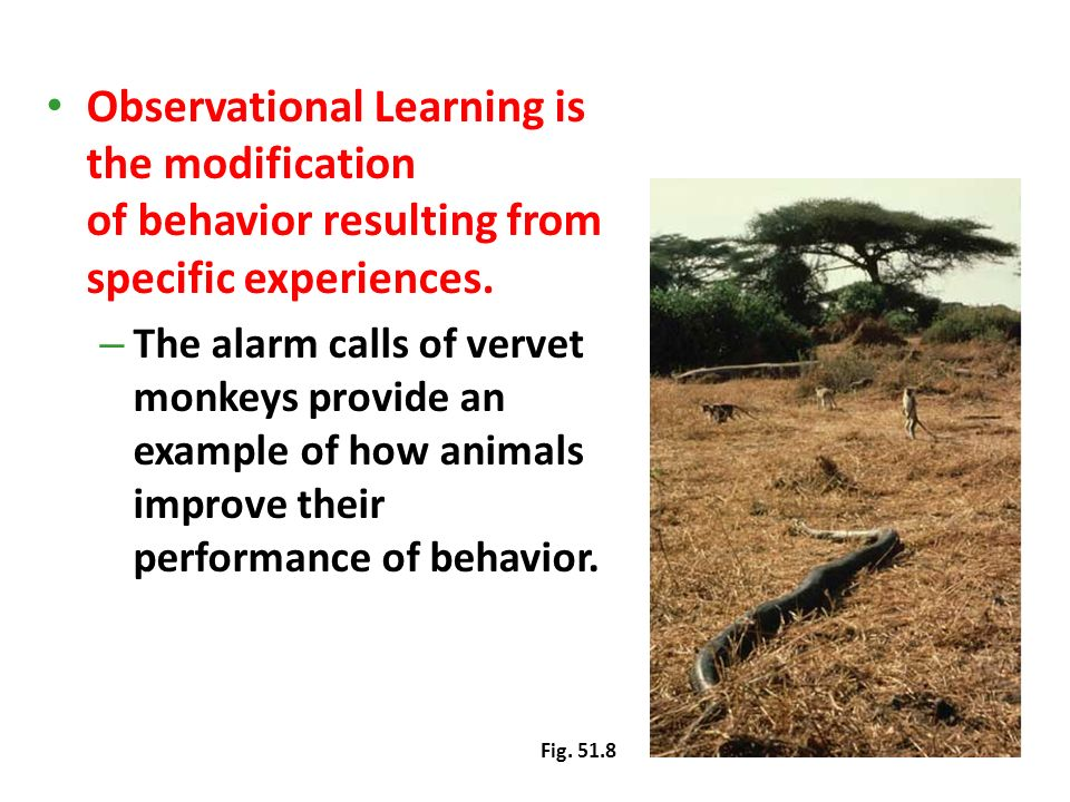 Observational Learning is the modification of behavior resulting from specific experiences.