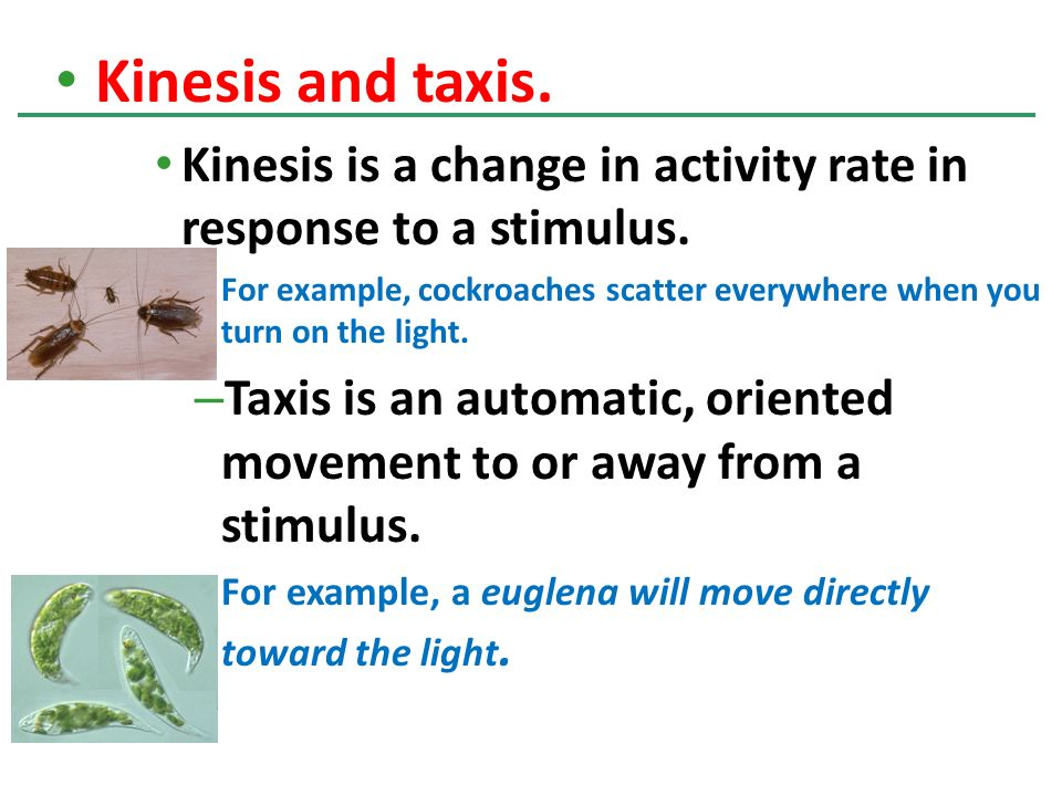 Kinesis and taxis. Kinesis is a change in activity rate in response to a stimulus.