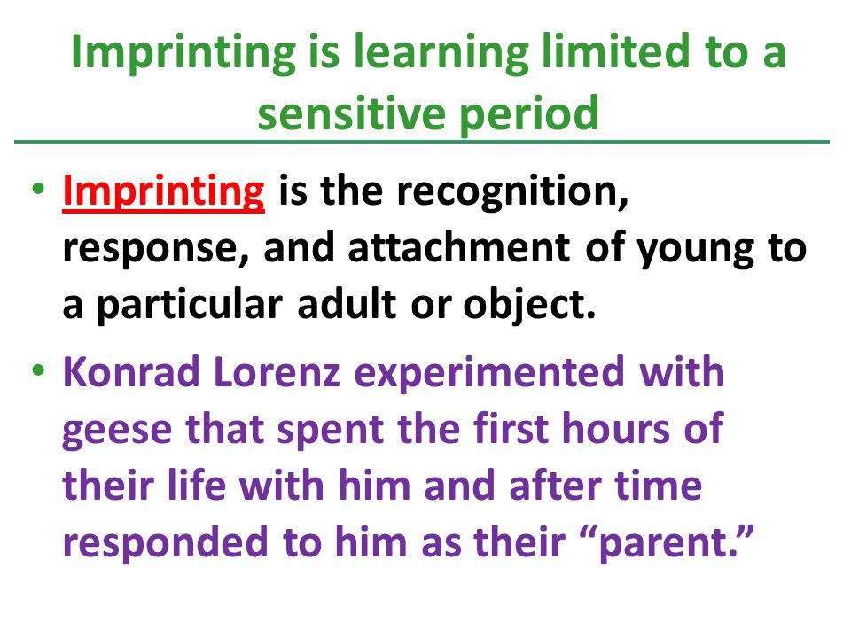 Imprinting is the recognition, response, and attachment of young to a particular adult or object.