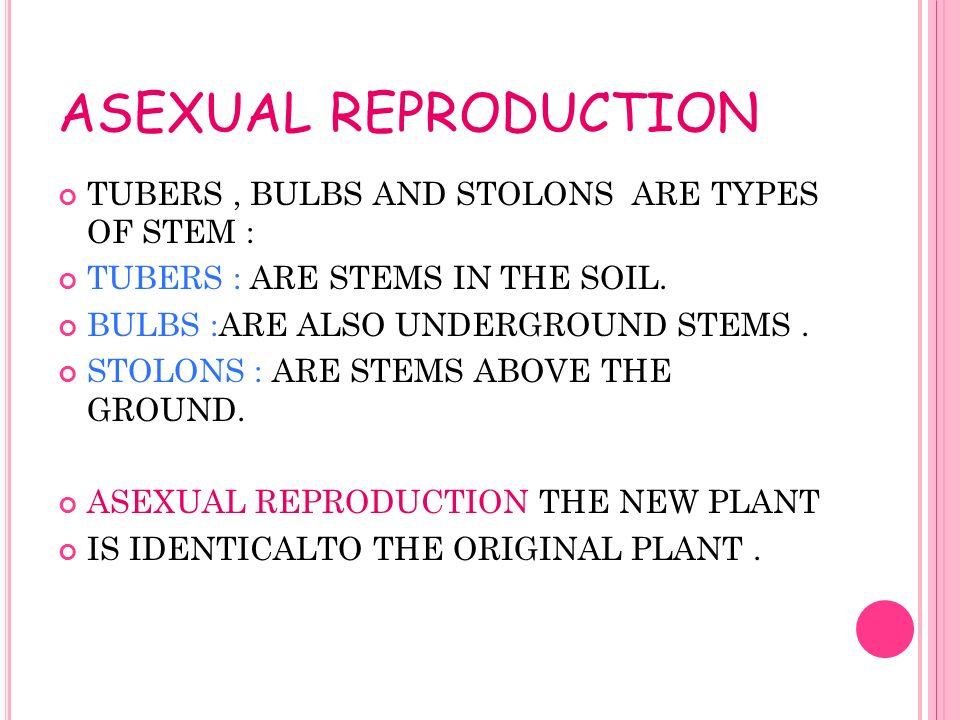 Stolons in asexual reproduction offspring