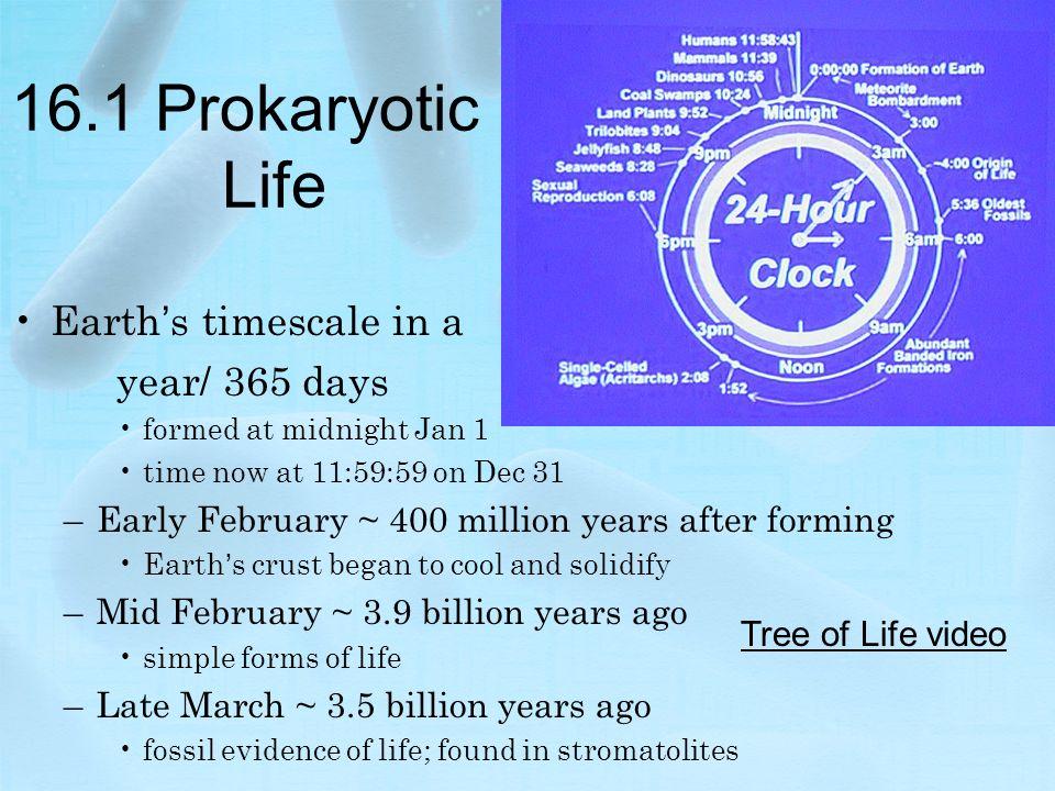 Chapter 16 Prokaryotes And Viruses 161 Prokaryotic Life Earths