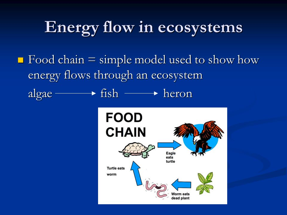 Energy flow in ecosystems Food chain = simple model used to show how energy flows through an ecosystem Food chain = simple model used to show how energy flows through an ecosystem algae fish heron