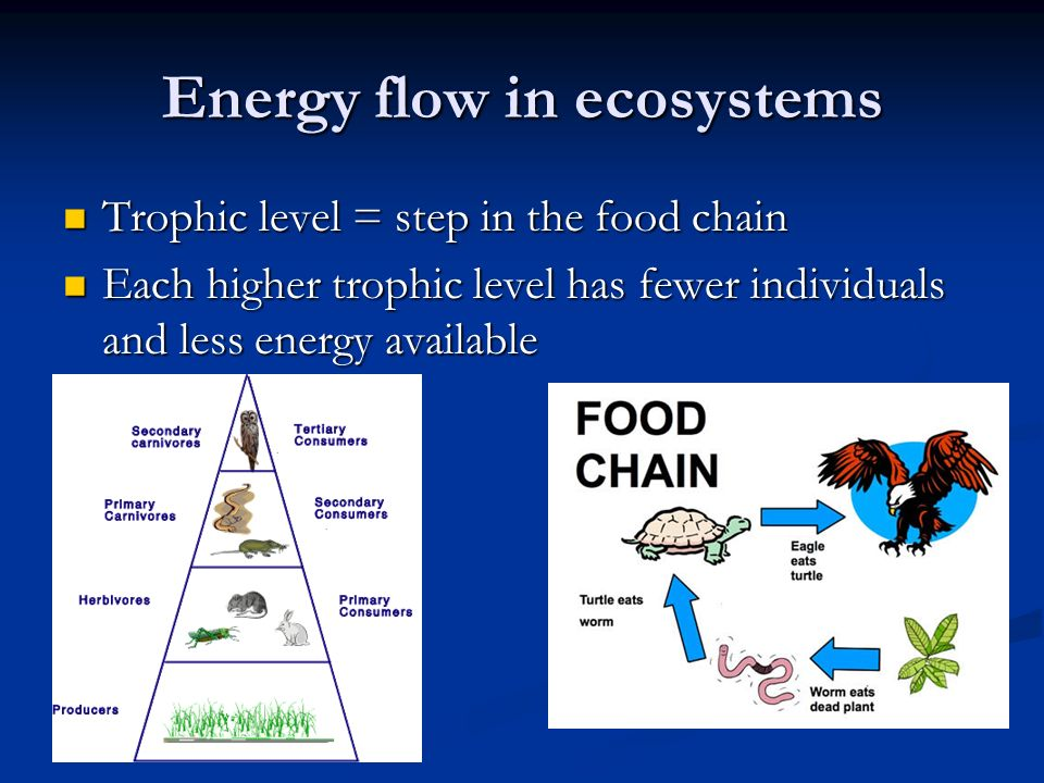 Energy flow in ecosystems Trophic level = step in the food chain Trophic level = step in the food chain Each higher trophic level has fewer individuals and less energy available Each higher trophic level has fewer individuals and less energy available