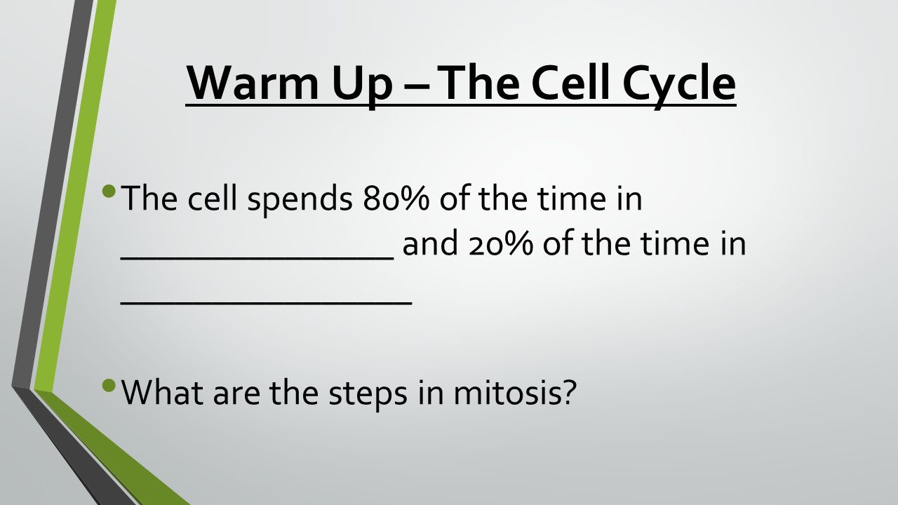 Warm Up – The Cell Cycle The cell spends 80% of the time in _______________ and 20% of the time in ________________ What are the steps in mitosis