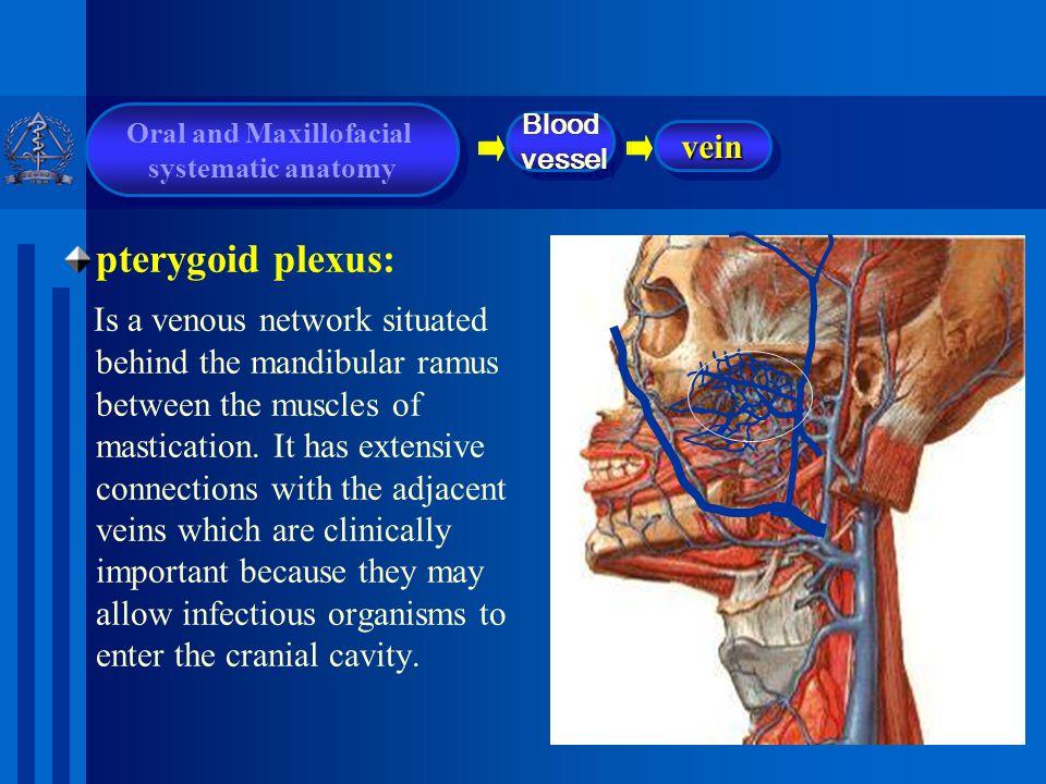 PTERYGOID PLEXUS DOWNLOAD