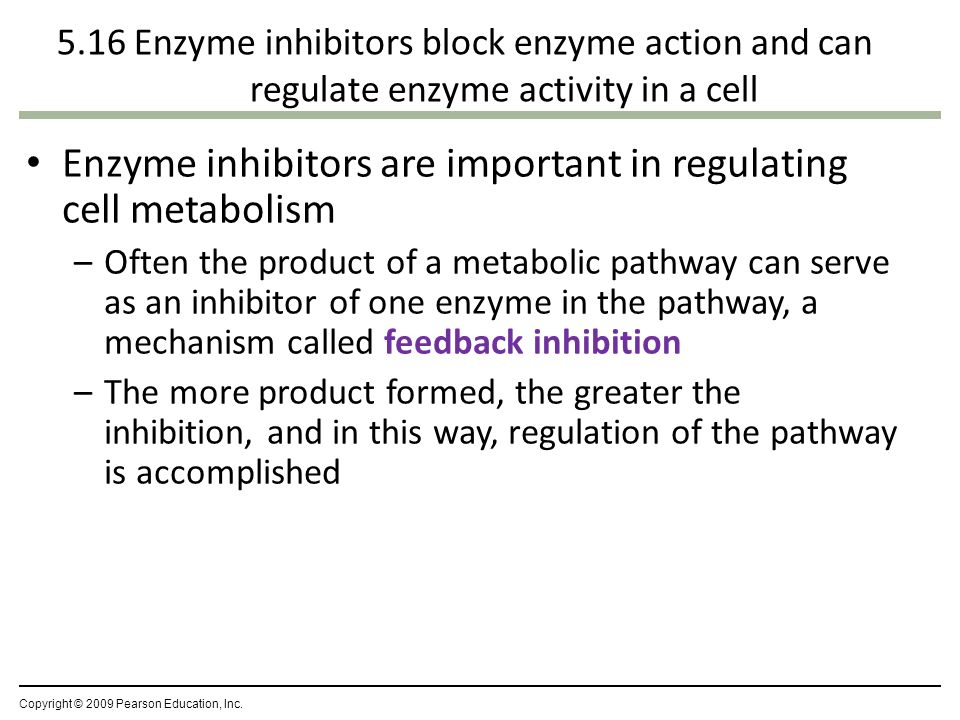 Enzyme inhibitors block enzyme action Inhibitors interfere with enzymes – A competitive inhibitor takes the place of a substrate in the active site – A noncompetitive inhibitor alters an enzyme's function by changing its shape Competitive inhibitor Noncompetitive inhibitor ENZYME INHIBITION NORMAL BINDING OF SUBSTRATE Substrate Active site Enzyme