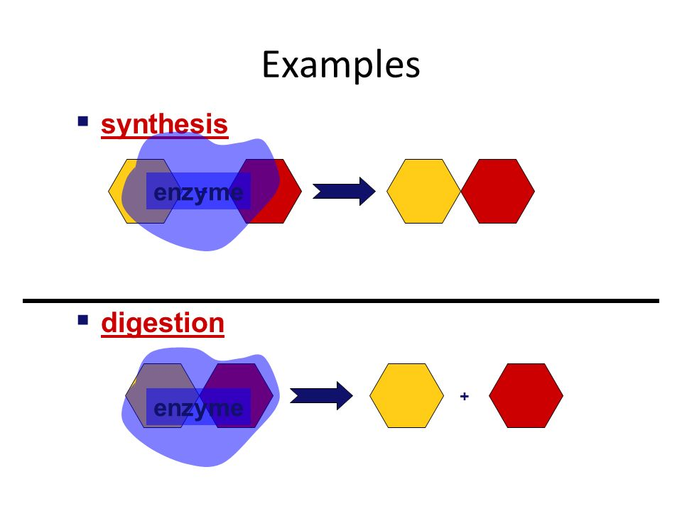 Nothing works without enzymes. How important are enzymes.