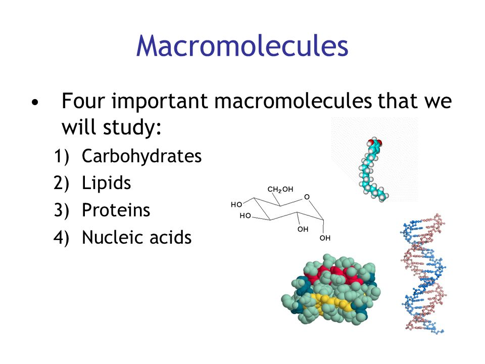 the characteristics of the main macromolecules nucleic acids lipids and carbohydrates The four macromolecules all life is composed mainly of the four macromolecule building blocks: carbohydrates, lipids, proteins, and nucleic acids the interactions of different polymers of these basic molecule types make up the majority of life's structure and function.