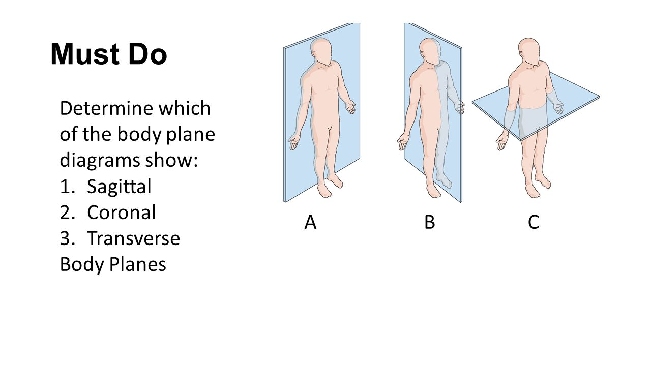 Must Do Determine which of the body plane diagrams show: 1