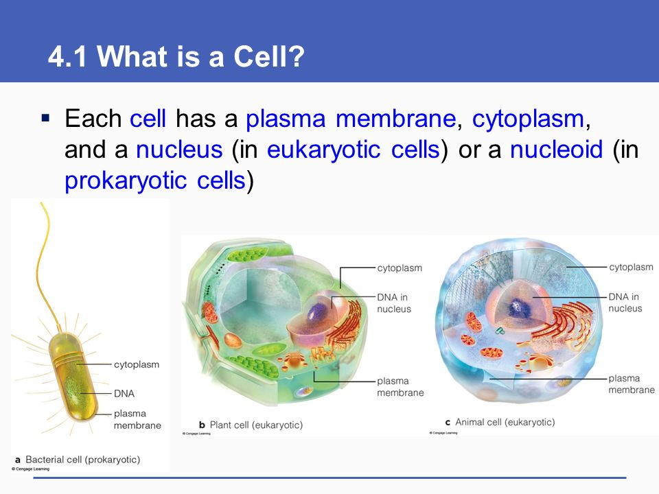 Cell Structure and Function Chapter 4 Biology Concepts and