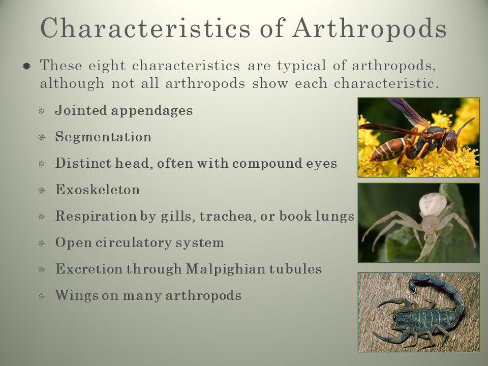unique characteristics of arthropods