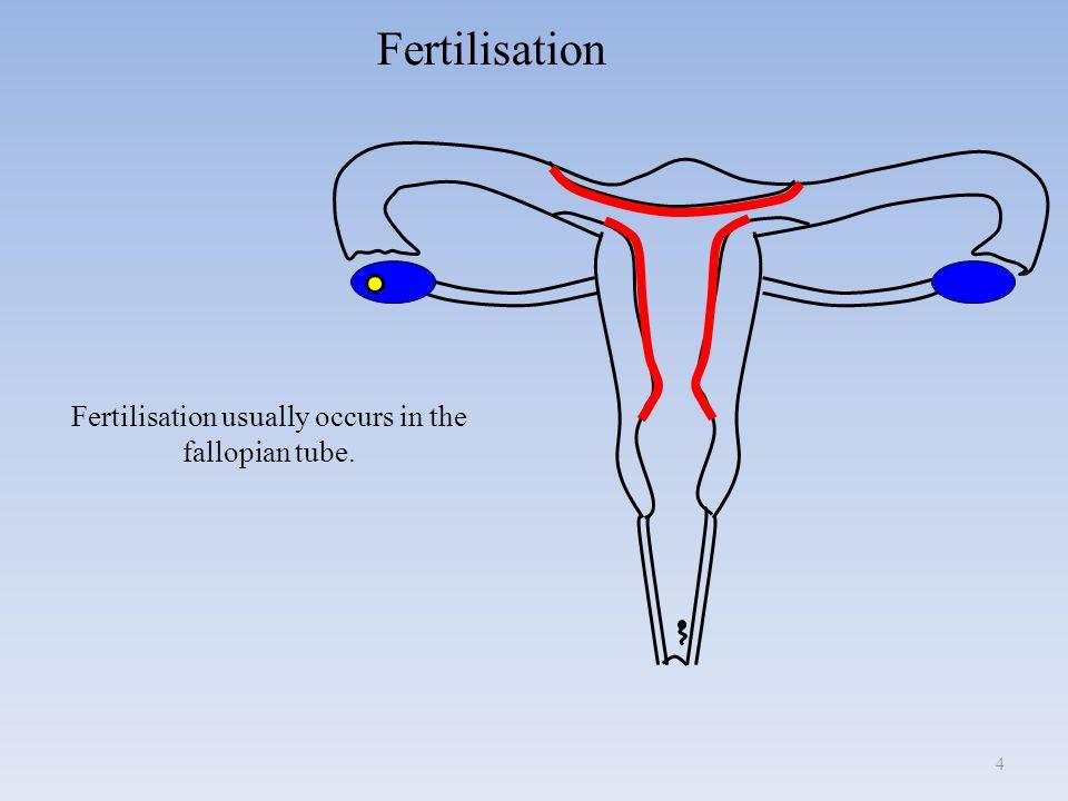 Penis Sliding Into Vagina