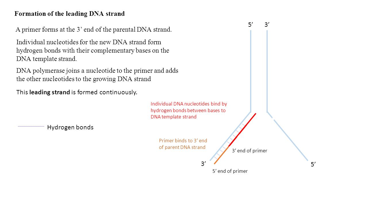DNADNA. Structure and replication of DNA - syllabus content ...
