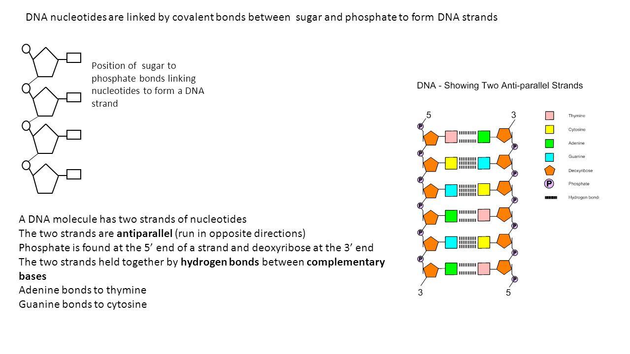 dna nucleotide ba self reliance - 1280×720