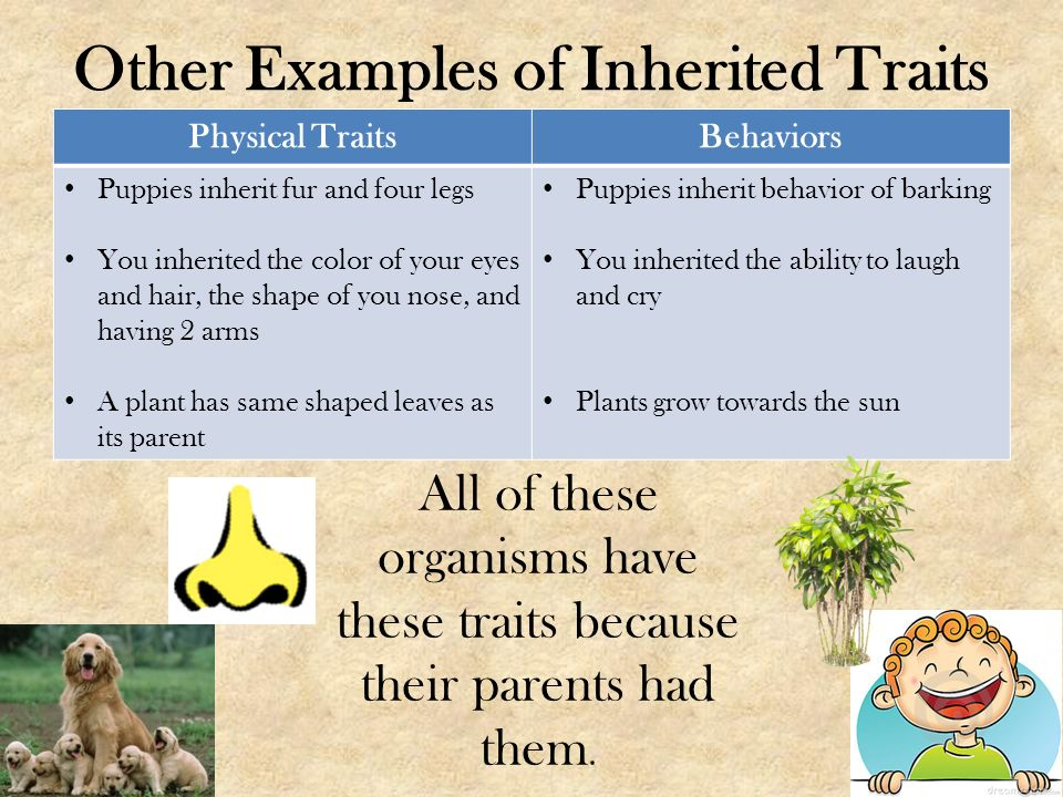 a study of inheritable traits in The study of how traits are inherited through the interactions of what is science of genetics the the study of how traits are inherited through the interactionsof alleles is the study of genetics.