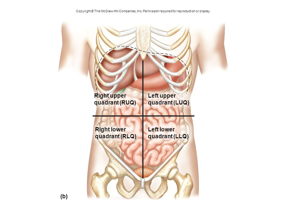 Outstanding Left Upper Quadrant Anatomy Ensign Anatomy And