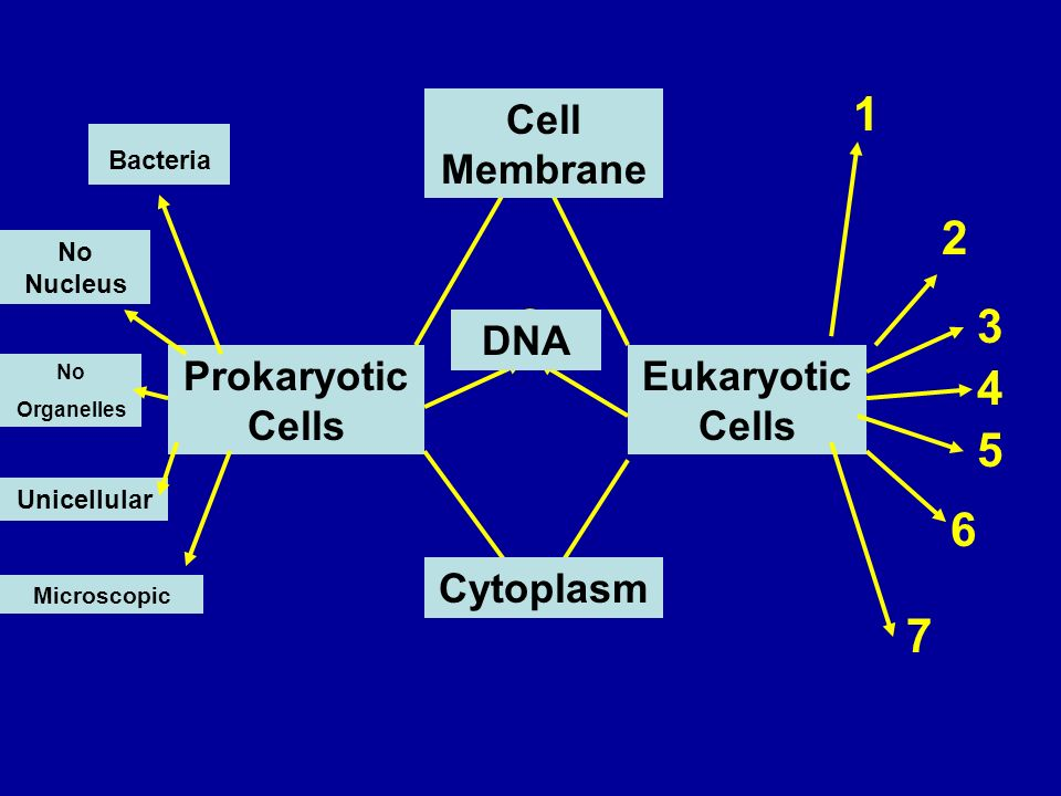 Prokaryotic Cells Eukaryotic Cells Cell Membrane DNA Cytoplasm Bacteria No Nucleus No Organelles Unicellular Microscopic