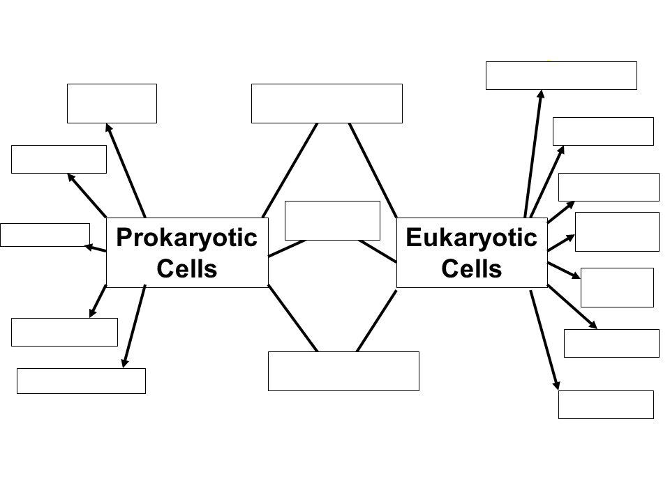 Prokaryotic Cells Eukaryotic Cells 3 1