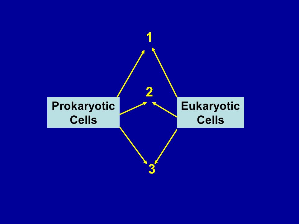 Prokaryotic Cells Eukaryotic Cells 1 2 3