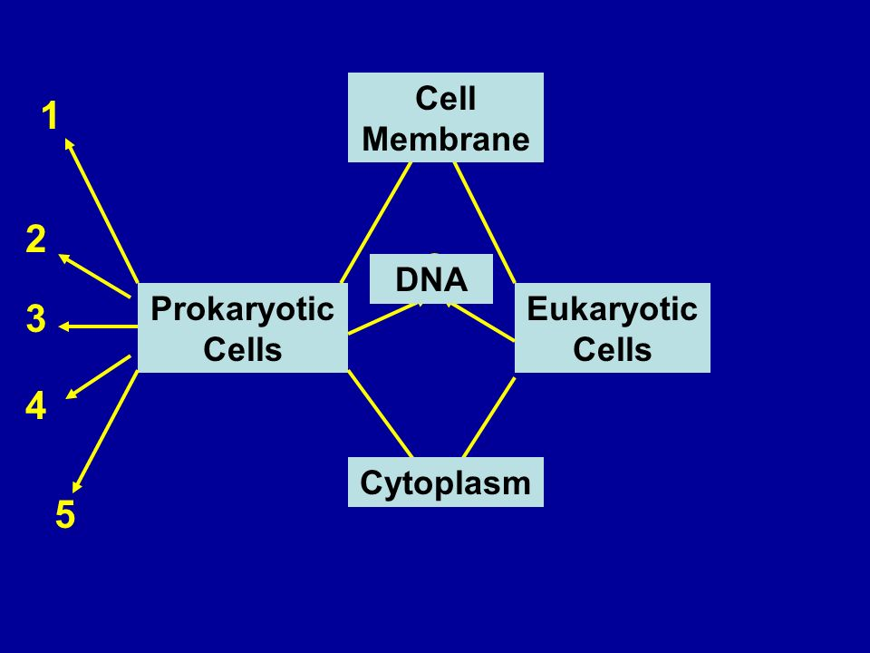 Prokaryotic Cells Eukaryotic Cells Cell Membrane DNA Cytoplasm