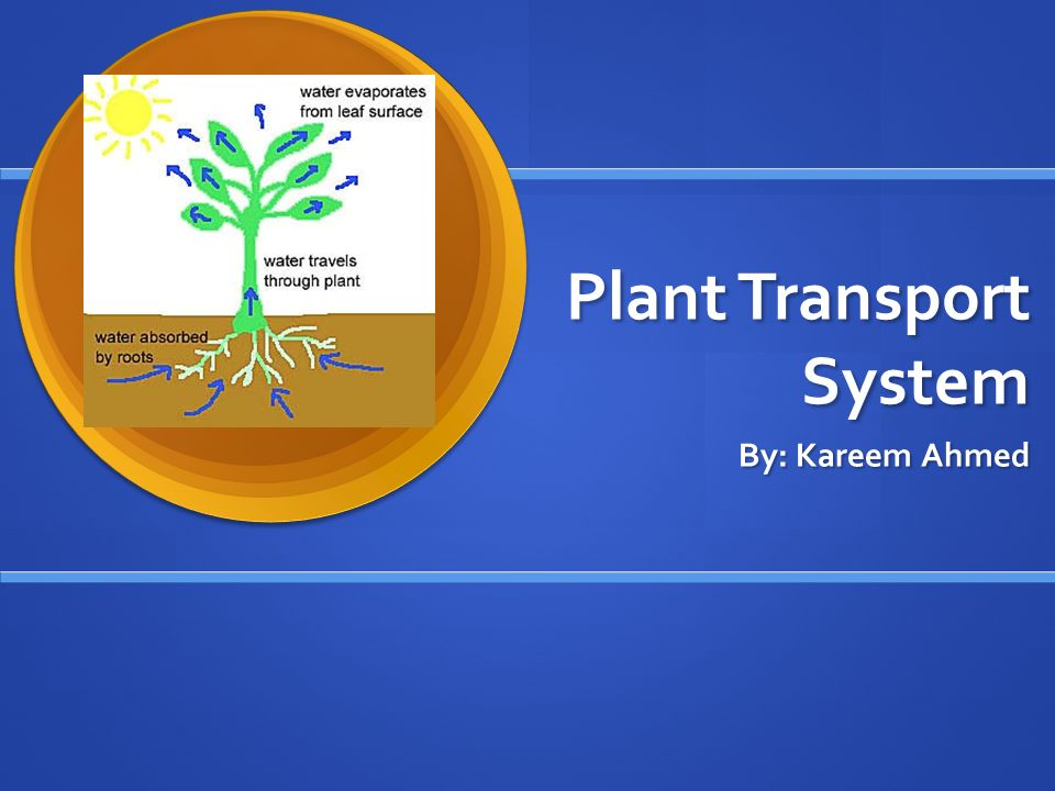 Plant Transport System By: Kareem Ahmed