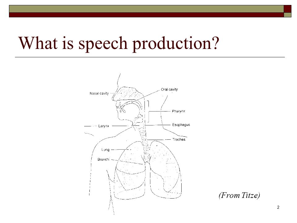 Sppa 2050 Speech Anatomy Physiology1 Western Michigan University