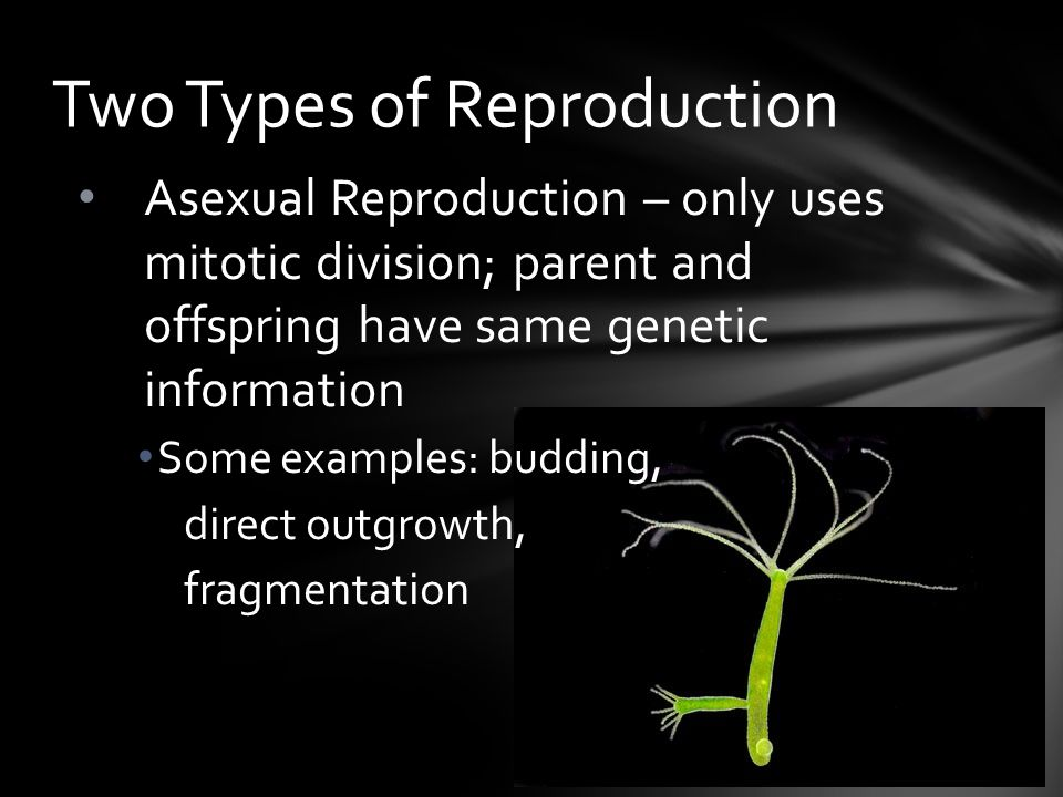 Observable traits are known in genetics asexual reproduction