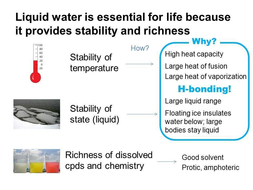 why is liquid water essential for life