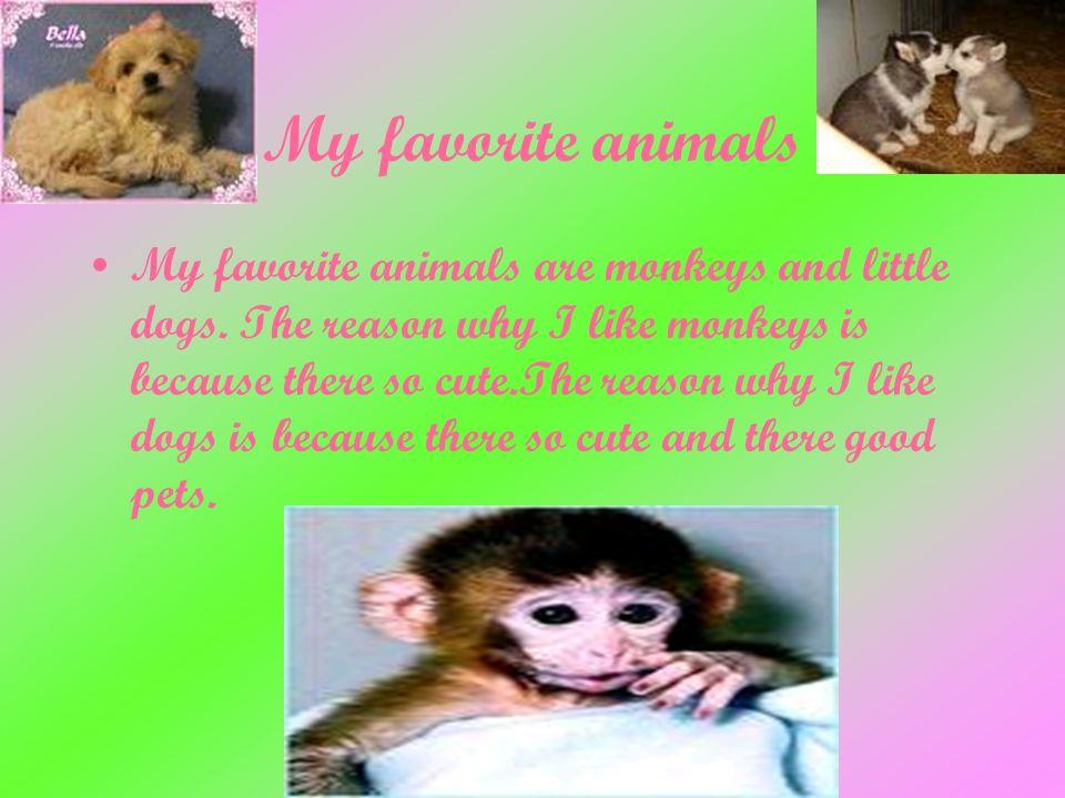My Favorite Animal: Monkeys