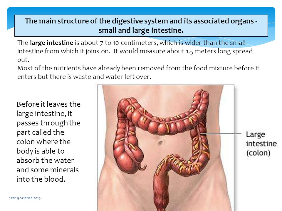 digestive digestion and entire small intestine The majority of digestion and absorption occurs in the small intestine by slowing the transit of chyme, segmentation and a reduced rate of peristalsis allow time for these processes to occur the smell of food initiates long reflexes, which result in the secretion of digestive juices.