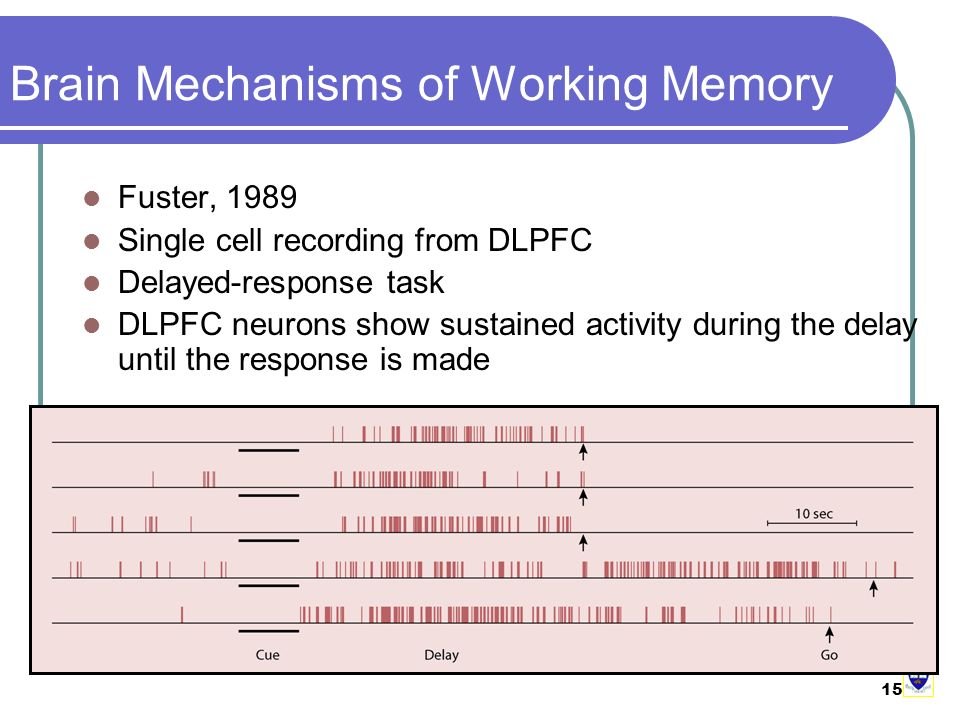 15 Brain Mechanisms of Working Memory Fuster, 1989 Single cell recording from DLPFC Delayed-response task DLPFC neurons show sustained activity during the delay until the response is made